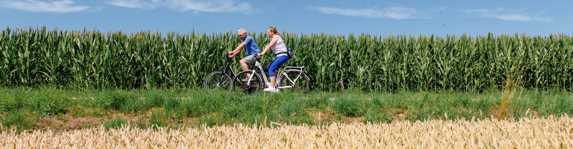 Paar beim Radfahren vor einem Maisfeld im Sommer