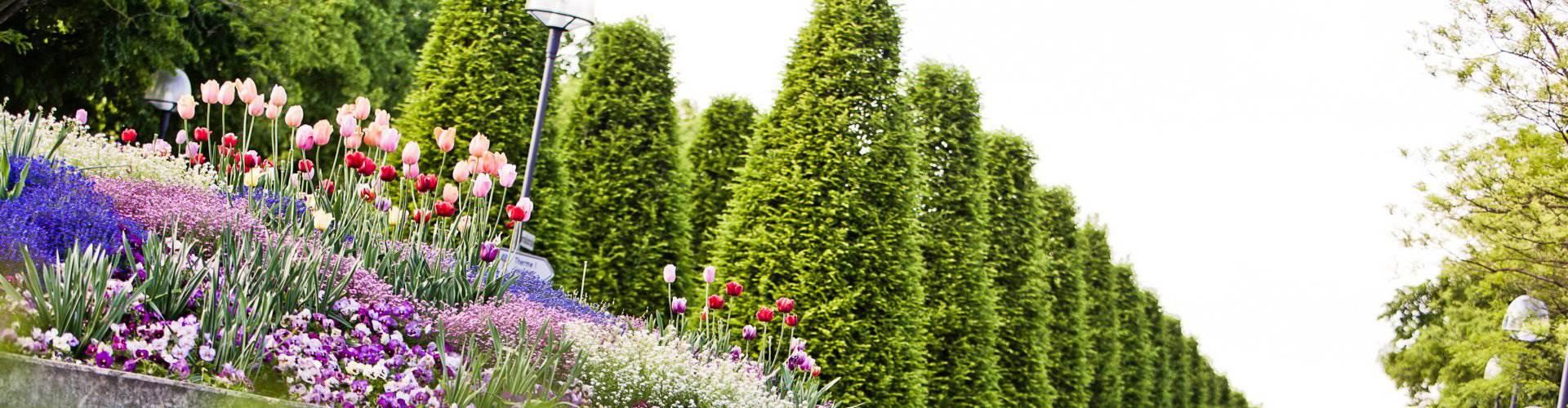 Blumenbeet und Bäume im Detail